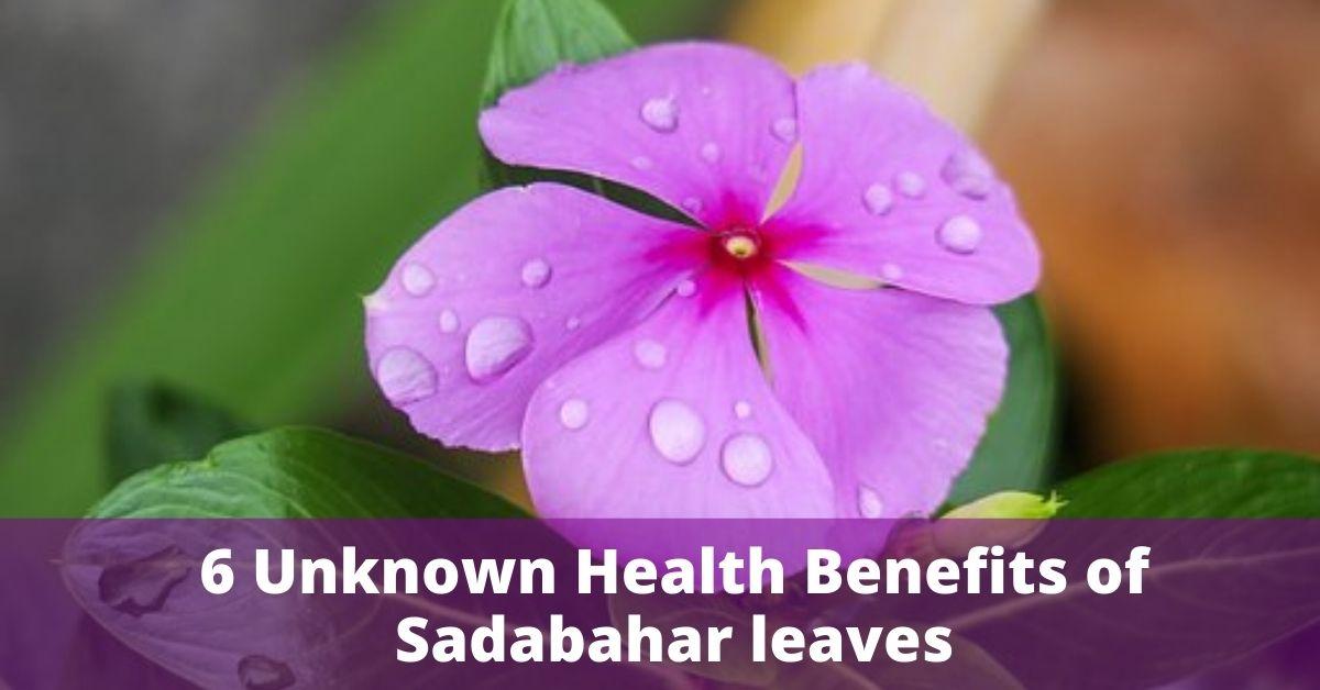 Health Benefits of Sadabahar leaves